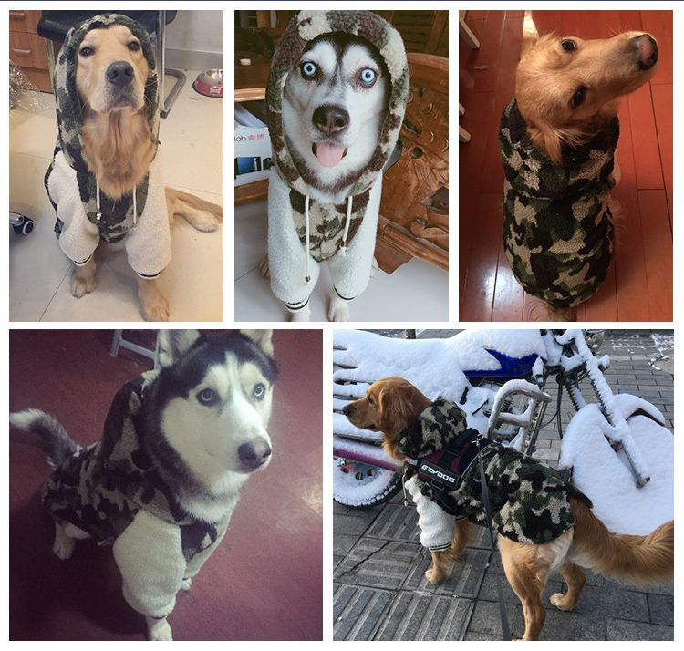 Big dog camouflage clothes